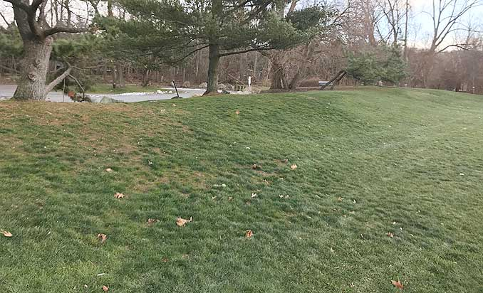 Photo of Old Cold Spring Dog Park Newton, Massachusetts